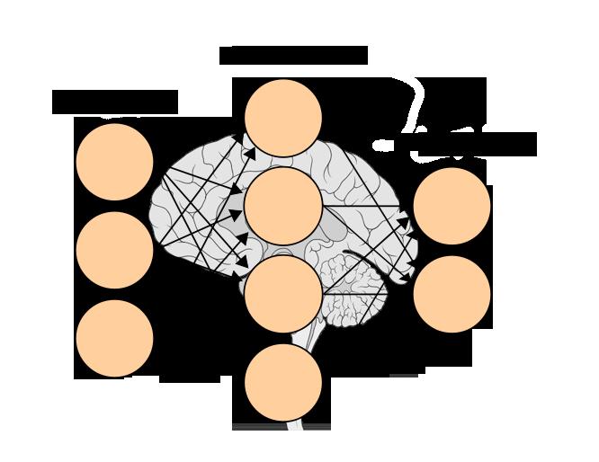 Voracity neural net